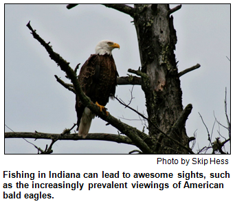 An American bald eagle, photographed by Skip Hess.