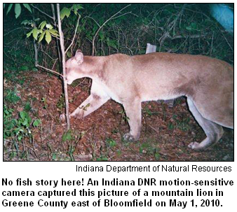 Mountain lion in Greene County, Ind.